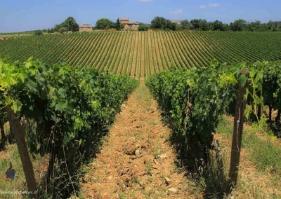 Chianti-Wine-Tour